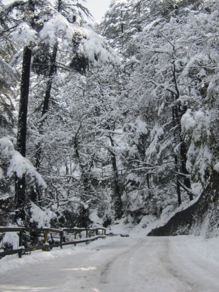 beautiful Shimla Roads