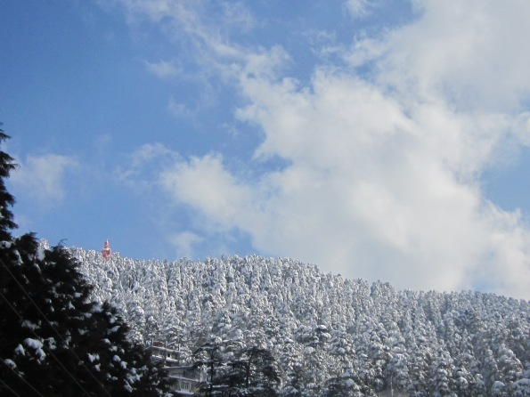 Woods in the Snow - Shimla